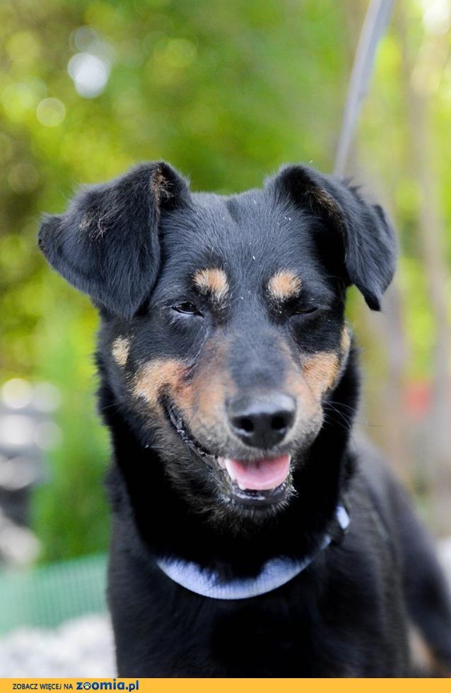 Nakolankowa Kropeczka, cudowna kandydatka na psiego przyjaciela!