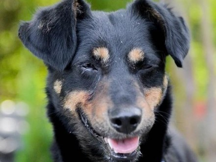 Nakolankowa Kropeczka  cudowna kandydatka na psiego przyjaciela!