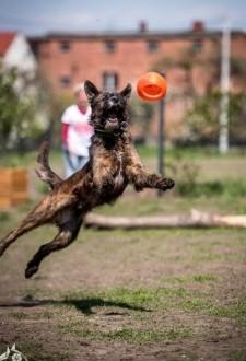 Londi - latający pies !