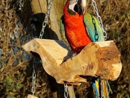 Naturalna Huśtawka dla duzych papug