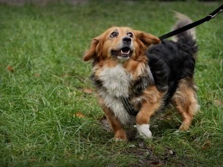 KULKA - adoptuj wspaniałego psa  co wiarę w ludzi ma :)