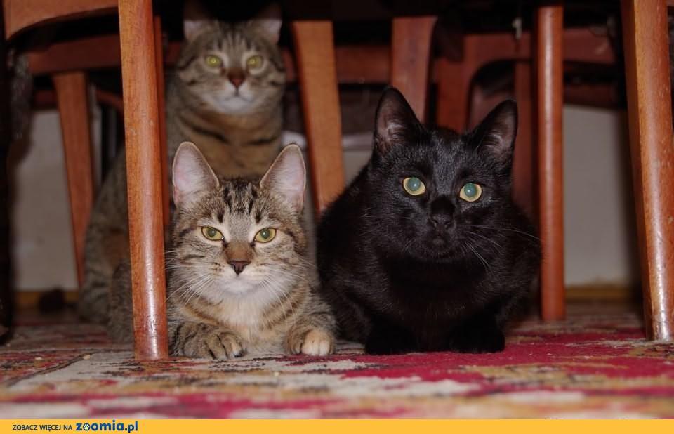 Koteczki psoteczki do adopcji