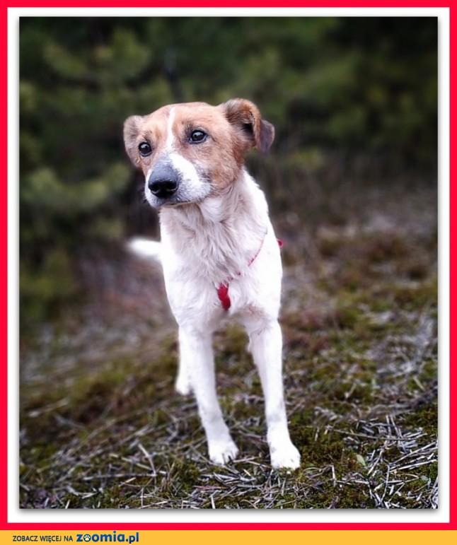 Rodzinny psiak,spokojny,łagodny,szczepiony,średni 13 kg, BODY_Adopcja_