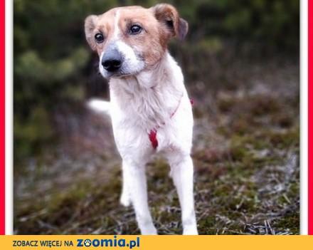 Rodzinny psiak spokojny łagodny szczepiony średni 13 kg  BODY_Adopcja_