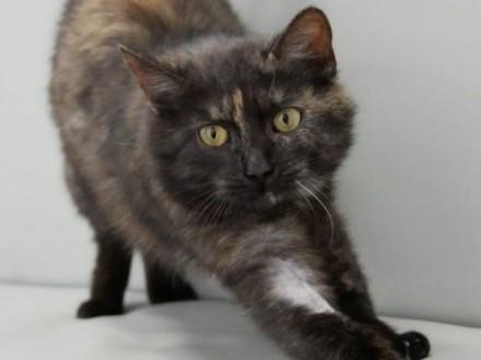 Tosia  8 miesięczna zdrowa kotka szuka domu!   Koty pospolite cała Polska