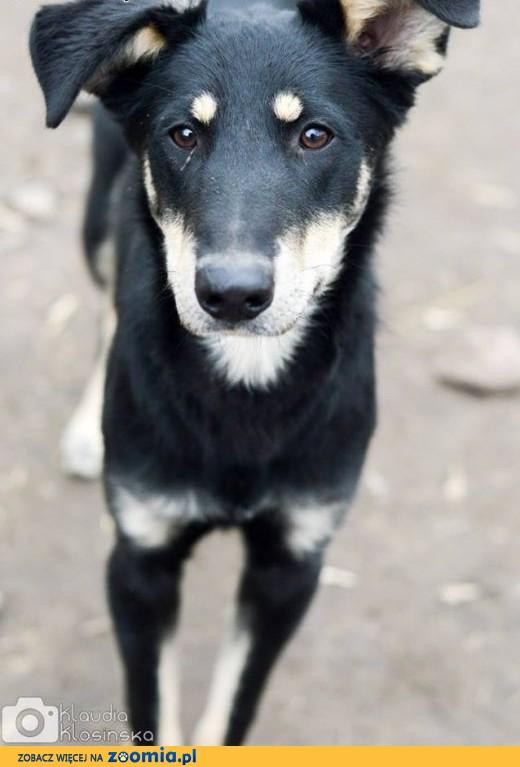 12 miesięczny Pixel, przyjazny, niekonfliktowy psiak szuka domu!,  Kundelki cała Polska