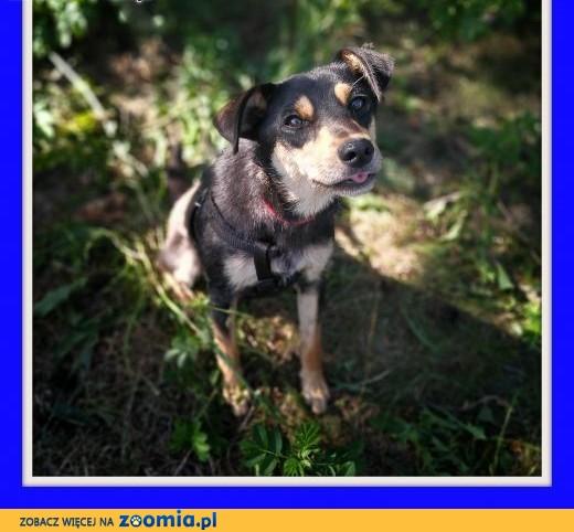 Śliczna,mała,drobna,kochana sunia 1 rok GUNIA szuka domu.Adopcja,  dolnośląskie Wrocław