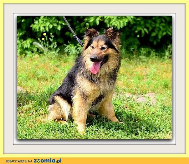 Do agility idealny, 15kg, 2 lata,długowłosy pies PEDRO_Adopcja