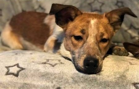 9 miesięczne  urocze szczeniaki wyrzucone na śmietnik do adopcji   mazowieckie Warszawa