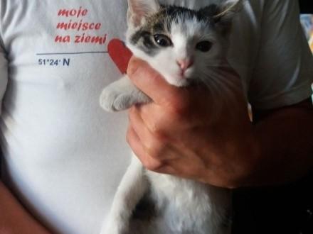 Wyrzucony jak zbędna rzecz  mały kotek szuka domu