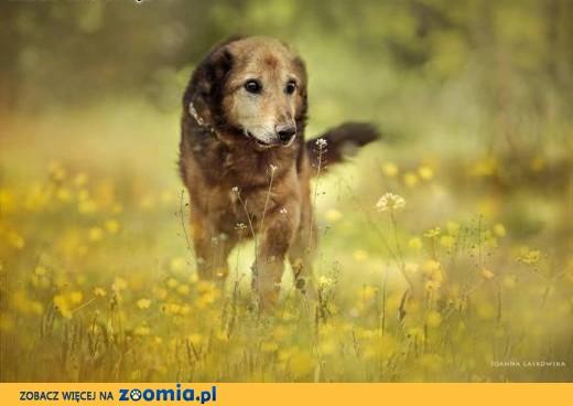LANER - psiak który po prostu kocha życie!,  mazowieckie Warszawa