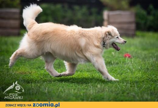 BUDYŃ - pies wyjątkowy, pokochać Cię gotowy!,  dolnośląskie Wrocław