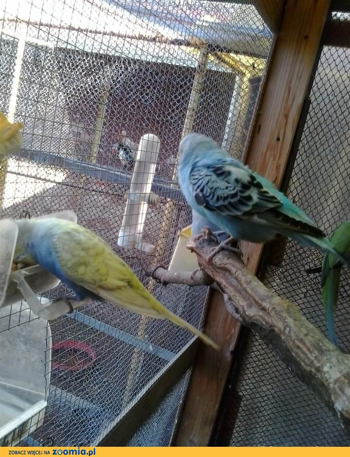 Ptaki--Egzotyka mała i duża przygarnę
