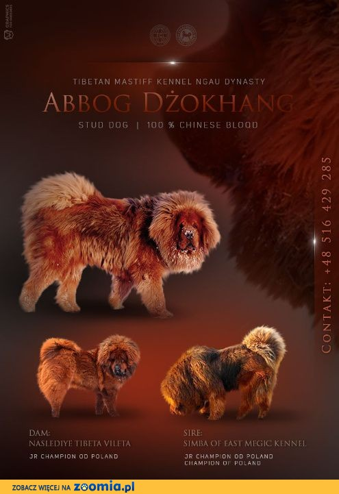 plakat - Abbog Dżokhang