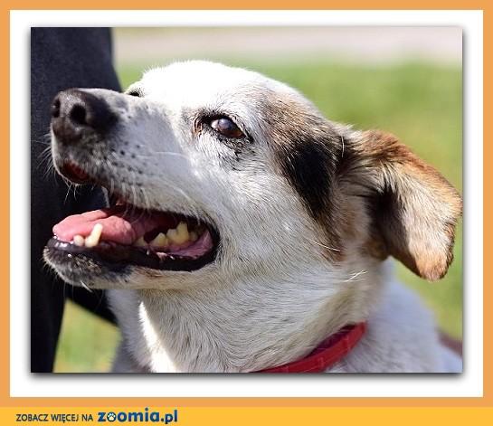 Średni przytulak,zaszczepiony, łagodny,spokojny,rodzinny psiak TERY_Adopcja