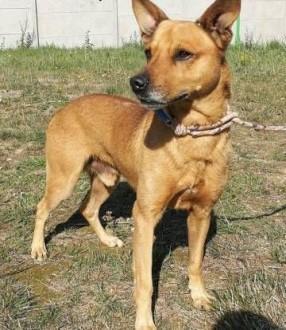 DINO - kochany  delikatny psiak szuka pilnie domu   mazowieckie Warszawa
