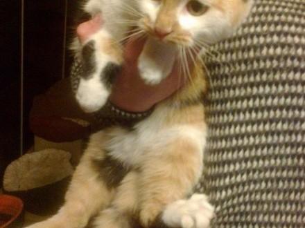 Koty radosne szukają domów     mazowieckie Warszawa
