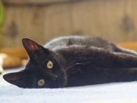 Koteczka Plamka szuka domu