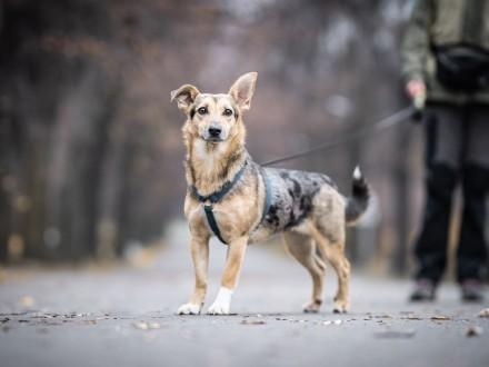 roczna KOLA szuka doświadczonego opiekuna  Warszawa Praga-Południe