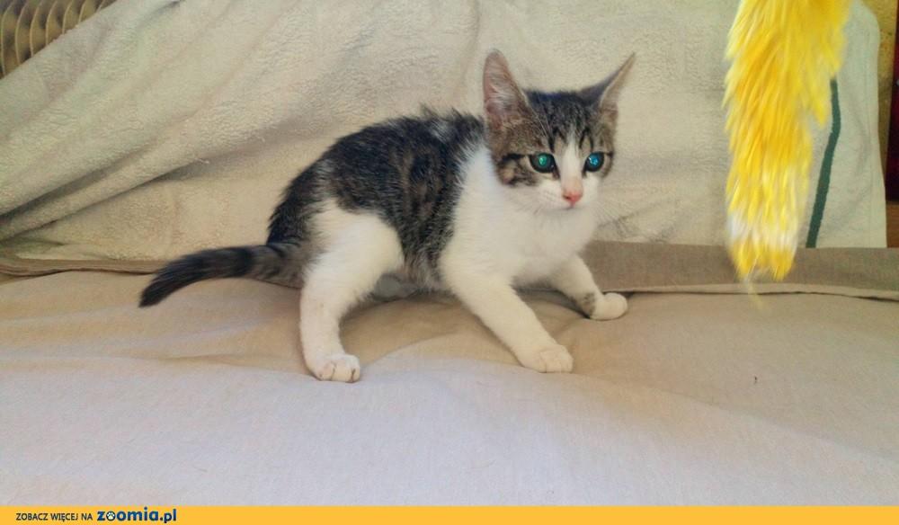 Mały kociak Fuksik szuka domu
