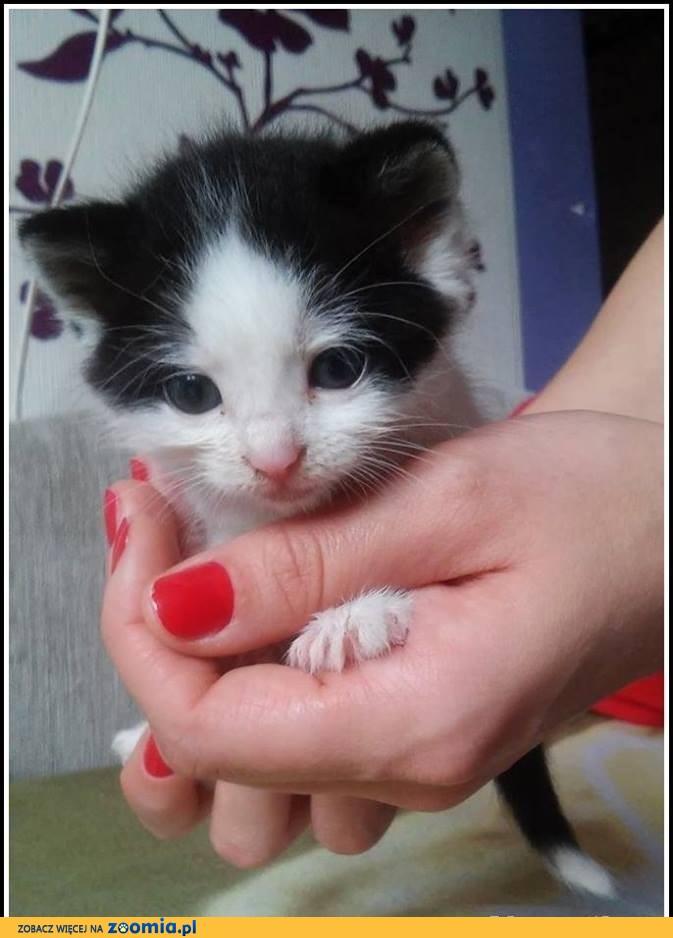 Mini koteczka TYCIA szuka domku!