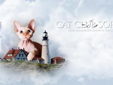 Pokaz Kotów Rasowych w Gdańsku