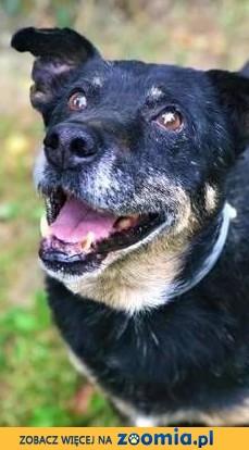 KABANOS - pies wyjątkowy, kocha ludzi, dzieci do adopcj