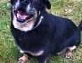 'KABANOS - pies wyjątkowy, kocha ludzi, dzieci do adopcj