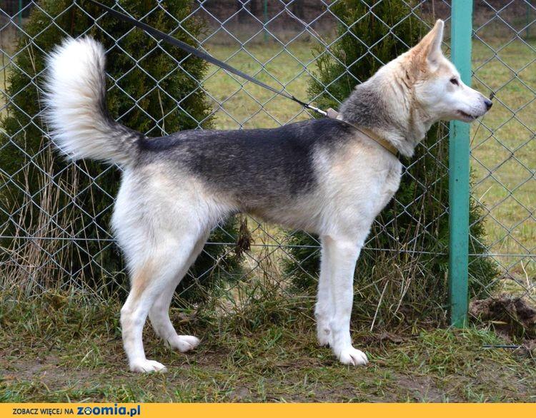 Naomi - prawdziwa psia dama :)