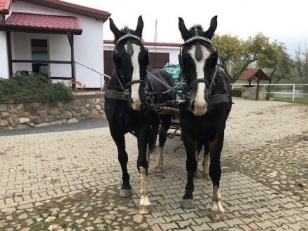 Sprzedam konie śląskie (rasy śląskiej)