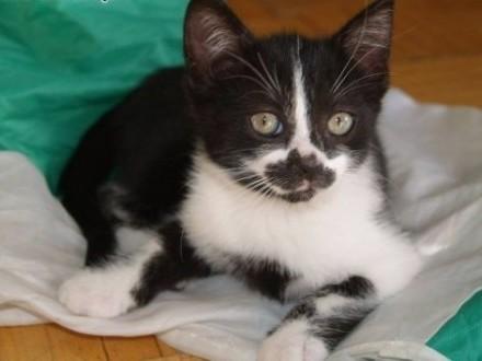 Kuna do adopcji przemila mala kotka   łódzkie Skierniewice
