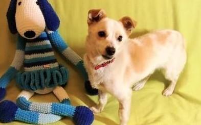 RAMBO - wrażliwy  malutki  6 kg psiak; szuka domu