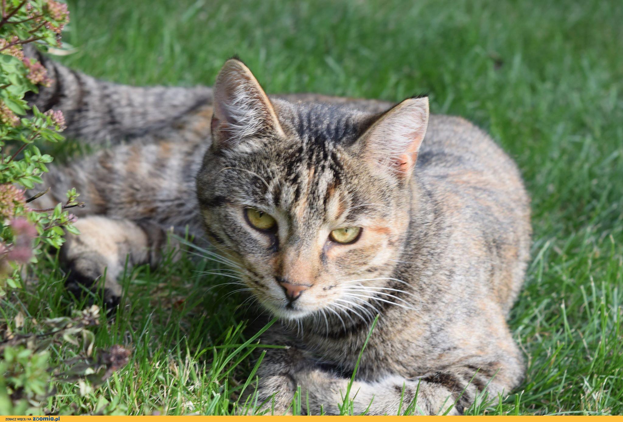 Pelasia, roczna zjawiskowa koteczka szuka domu!