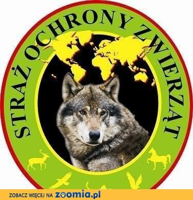 Poszukiwane domy Tymczasowe dla zwierzaków ! Słupsk i okolice :)