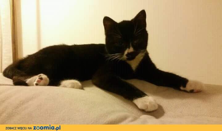 Koteczka Mania szuka domu
