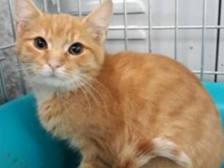 HRABIA-niesamowicie piękny  młody  delikatny kotek szuka domu  adopcja