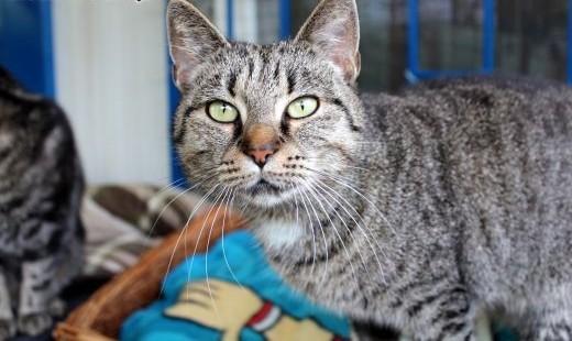 Piękna kotka Fiona szuka domu!   dolnośląskie Wrocław