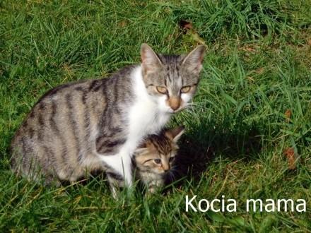 Szukamy domu dla znalezionej kotki