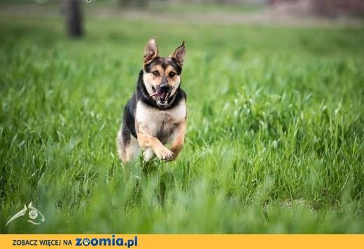 SARA odda Ci całe psie serce, daj jej tylko szansę !,  mazowieckie Warszawa