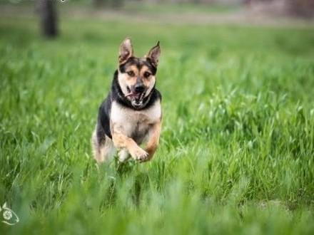 SARA odda Ci całe psie serce  daj jej tylko szansę !   mazowieckie Warszawa
