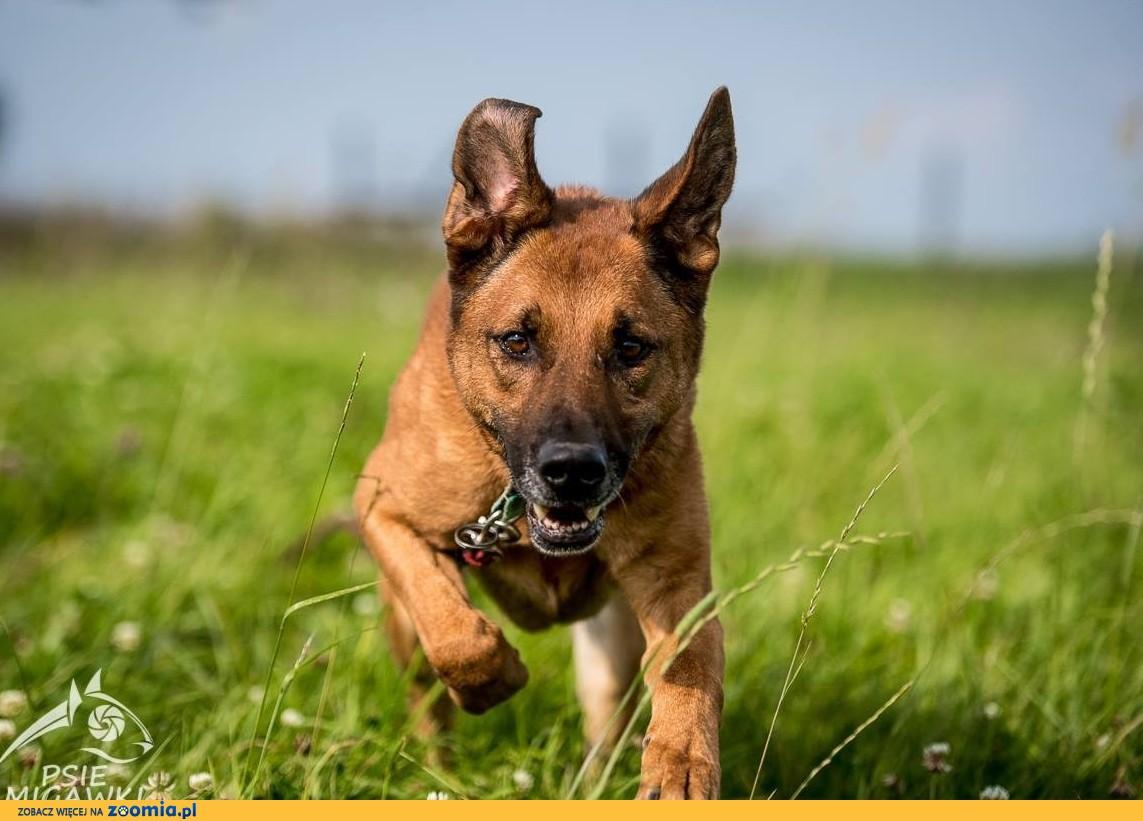 Radosny, wesoły i sympatyczny, KORIN to pies fantastyczny :)