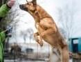 'Radosny, wesoły i sympatyczny, KORIN to pies fantastyczny :)