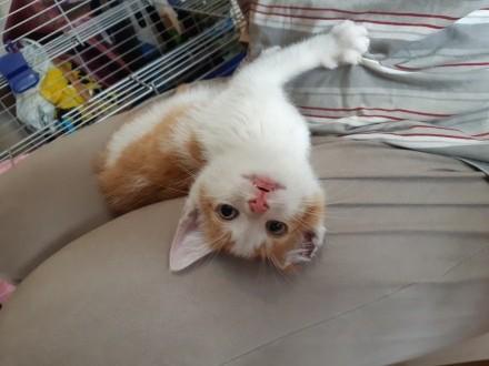 Lucuś – rozbrykany kociak