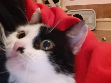 Cosiek Z Fundacji Miasto Kotów   łódzkie Tomaszów Mazowiecki