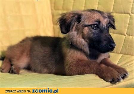 MIMI - 6 miesięczna, kochana szczeniaczka szuka domu,  mazowieckie Warszawa