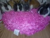 króliki króliczki karzełki teddy,  małopolskie Kraków