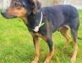 MISIO - kochany, łagodny psiak szuka domu,  mazowieckie Warszawa