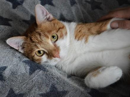 KOT: Kochający człowieka Garfield z Fundacji Miasto Kotów szuka domu