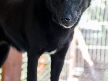 Aura  czarna perełka  zwierzolubna sunia szuka swojego miejsca na ziemi!