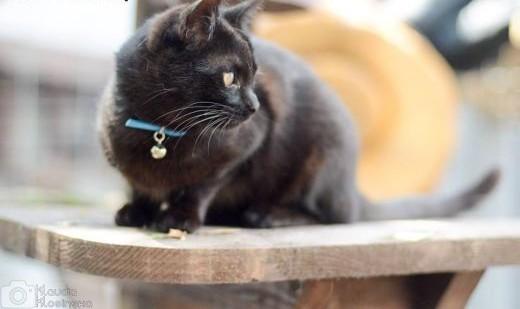 Arielka  7 miesięczna czarna piękność do pokochania!   Koty pospolite cała Polska